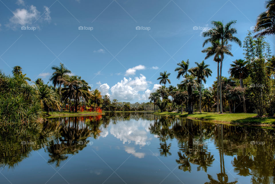 Palm trees reflected on lake