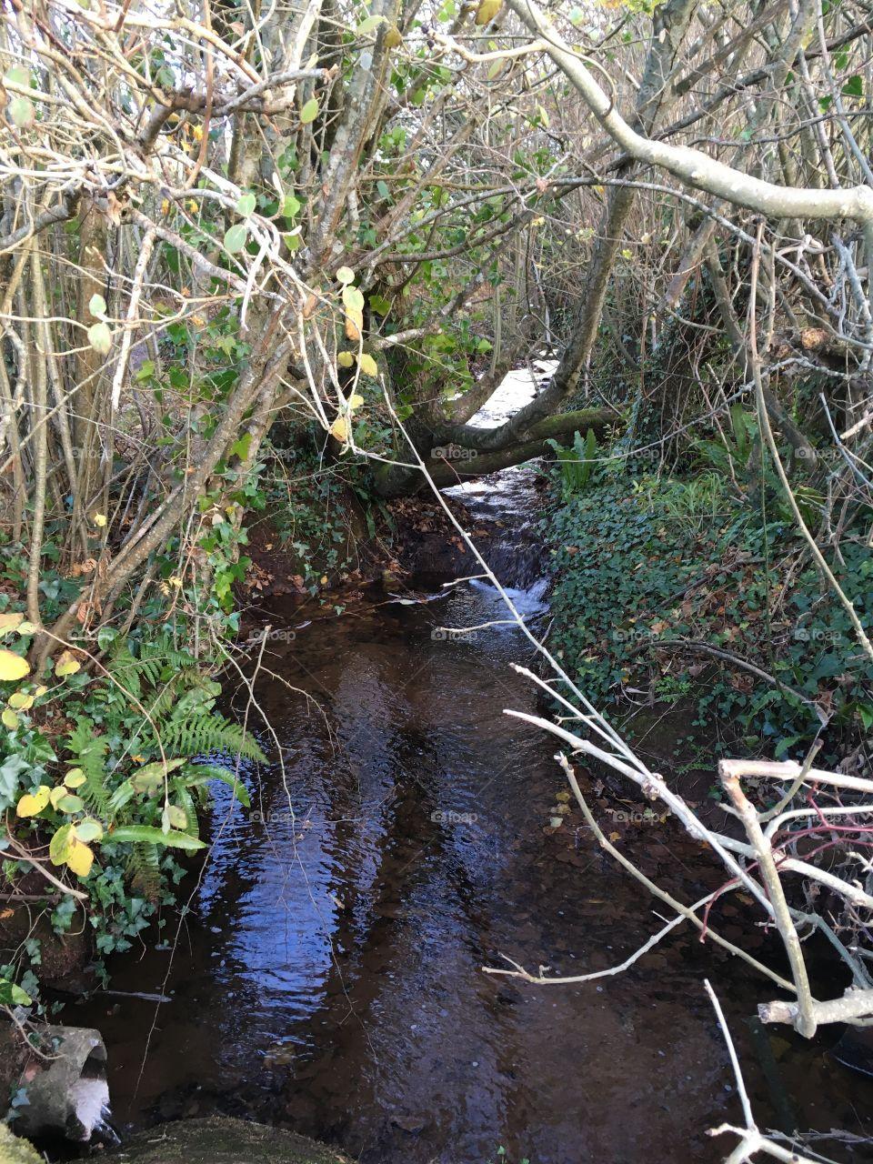 Delightful example of a Devon stream.