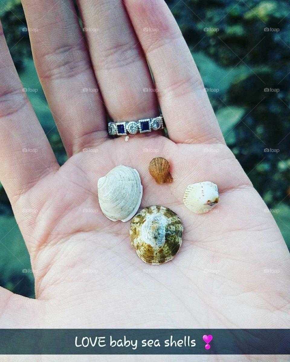 Baby seashells