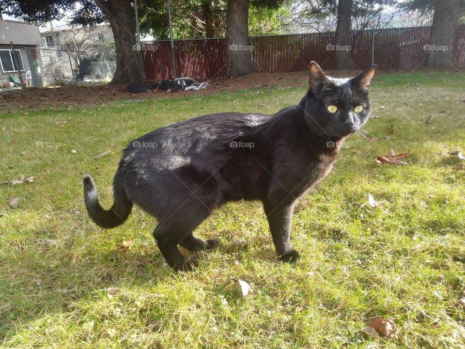 A black cat named Sebastian, enjoying the sun 🌞