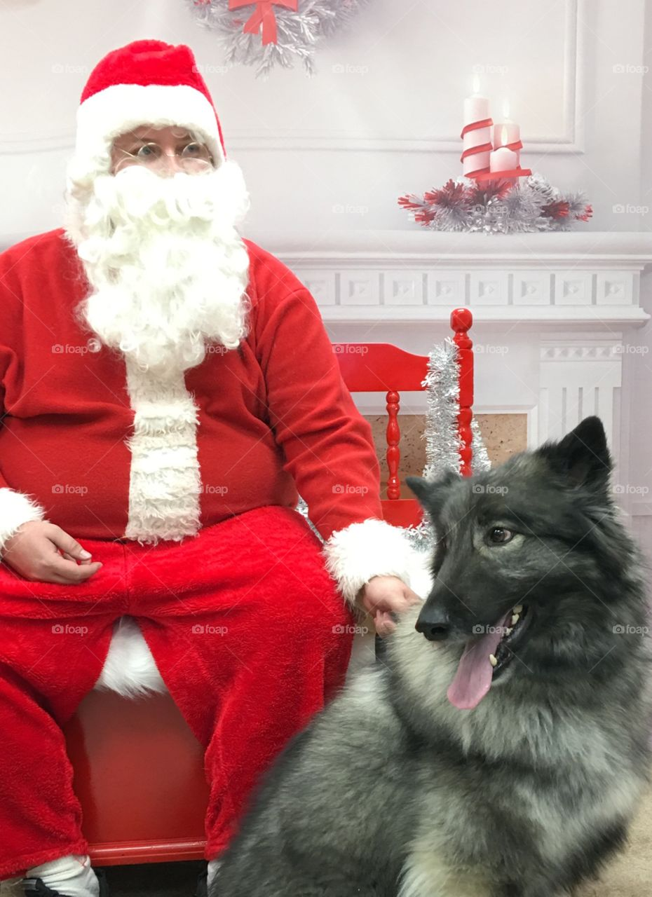 Balto meets Santa. 🐶🎄🎅🏻 Sit on Santa's lap?  No, thank you.  😂