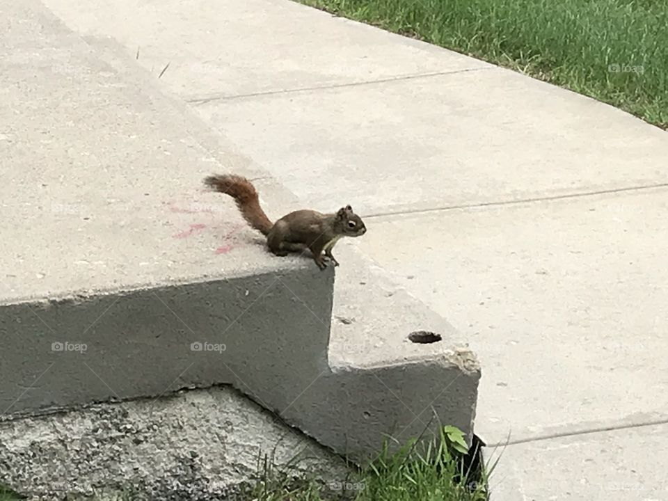 A squirrel is looking to get away.