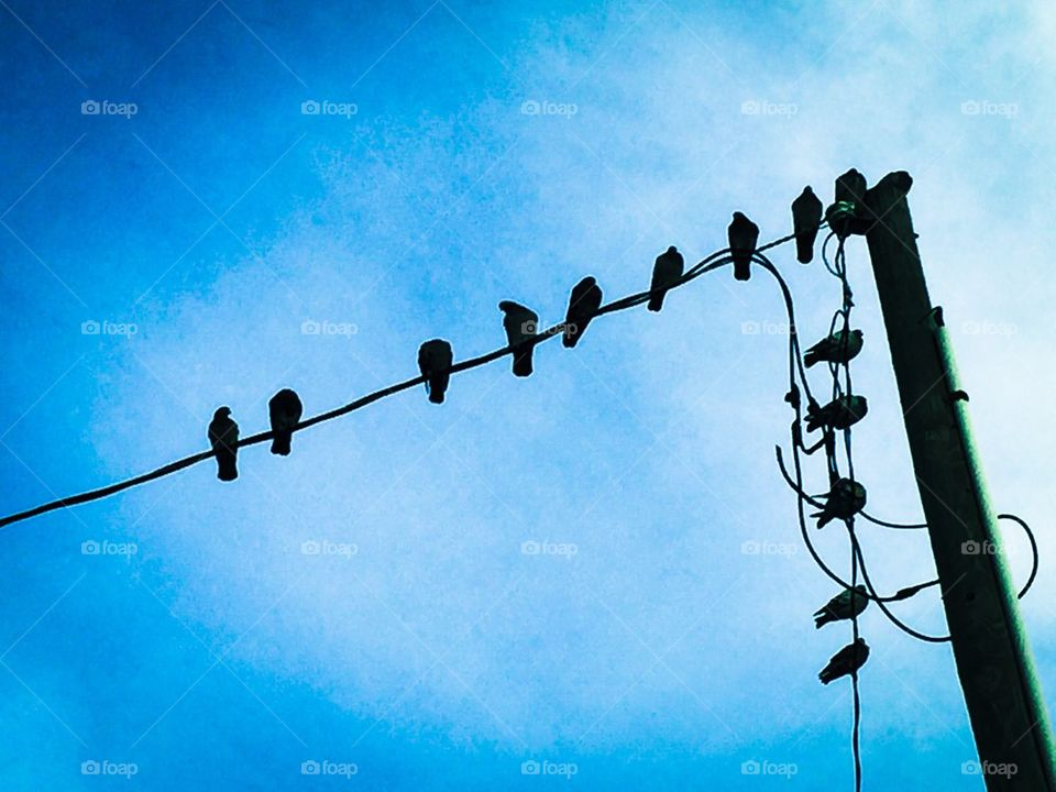 Birds On A Wire. Birds On A Wire