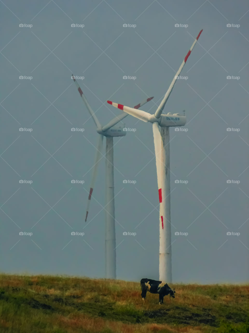 Electricity source or energy source that is skyscraper windmills on top of hill with grazing cattle.