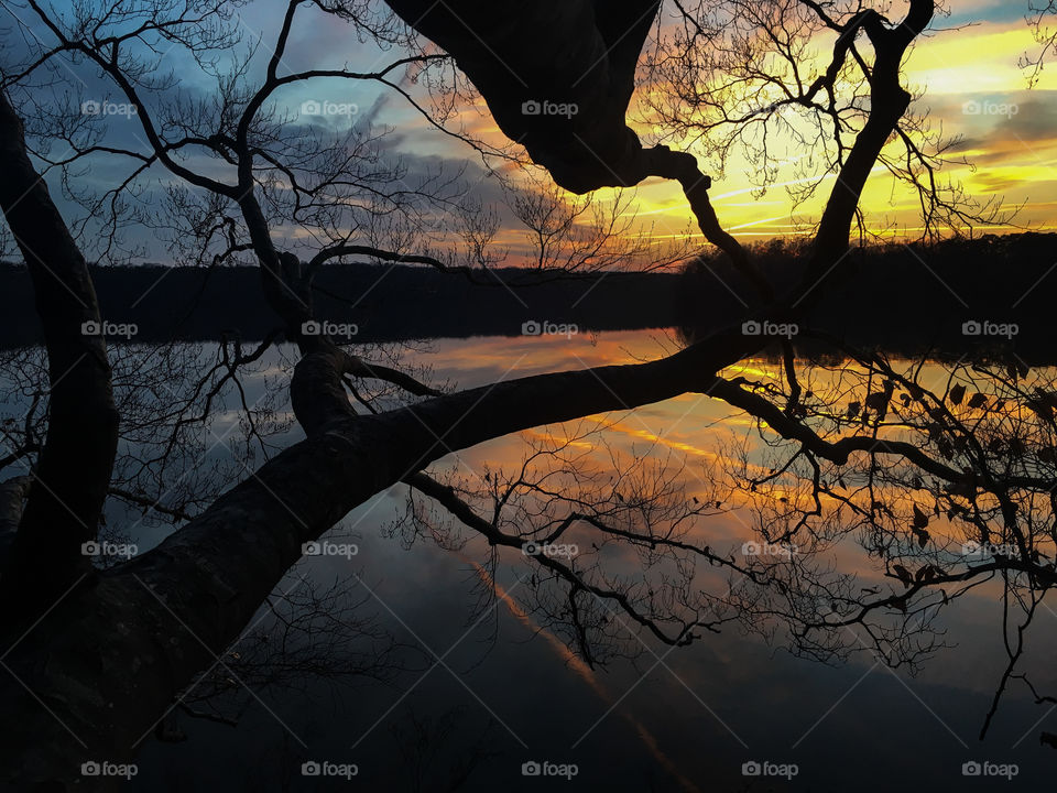 Tree branches silhouetted by the golden sunset at Lake Benson Park in Garner North Carolina, Raleigh Triangle area, Wake County.