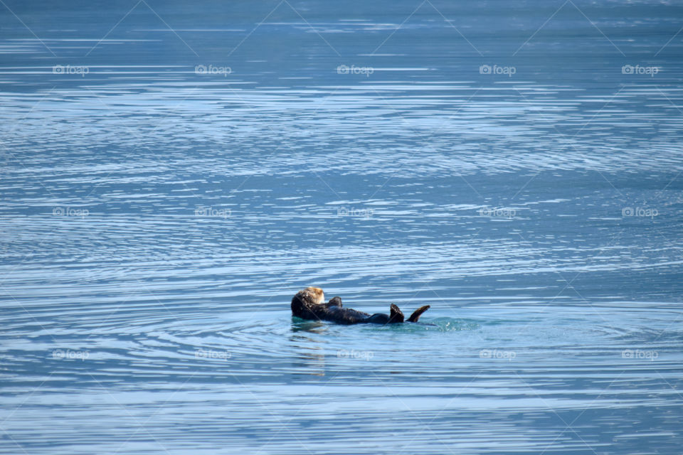 Water, Sea, Ocean, Swimming, No Person