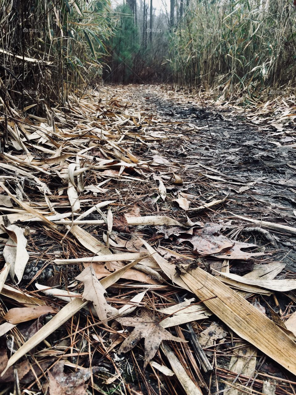 Muddy trail covered with senesced cane leaves in the forest