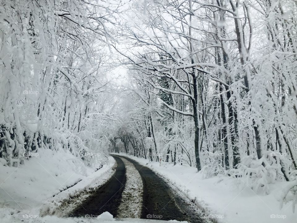 View of empty road in forest during winter