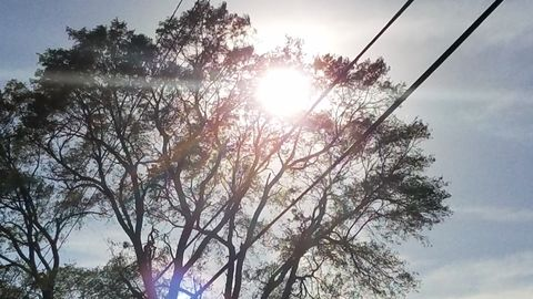 the Sun as seen through branches of a tree