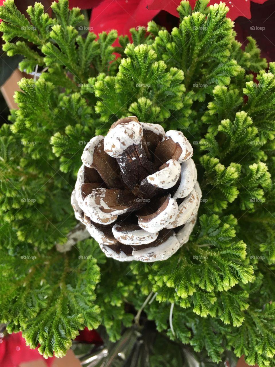Pine cone, pine, plant, green, craft, holiday, bouquet, decoration, decor, Christmas, no person, outdoor, closeup, evergreen