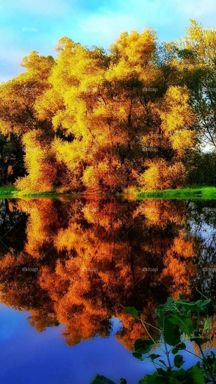 Autumn trees reflected on lake