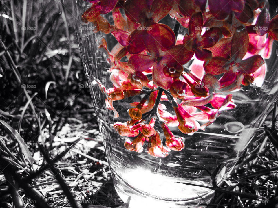 Drowned lilacs
