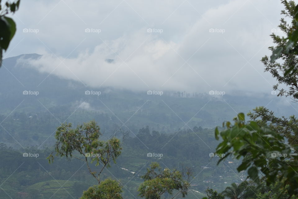 Misty mountains and forest been touched by white beauty #clouds