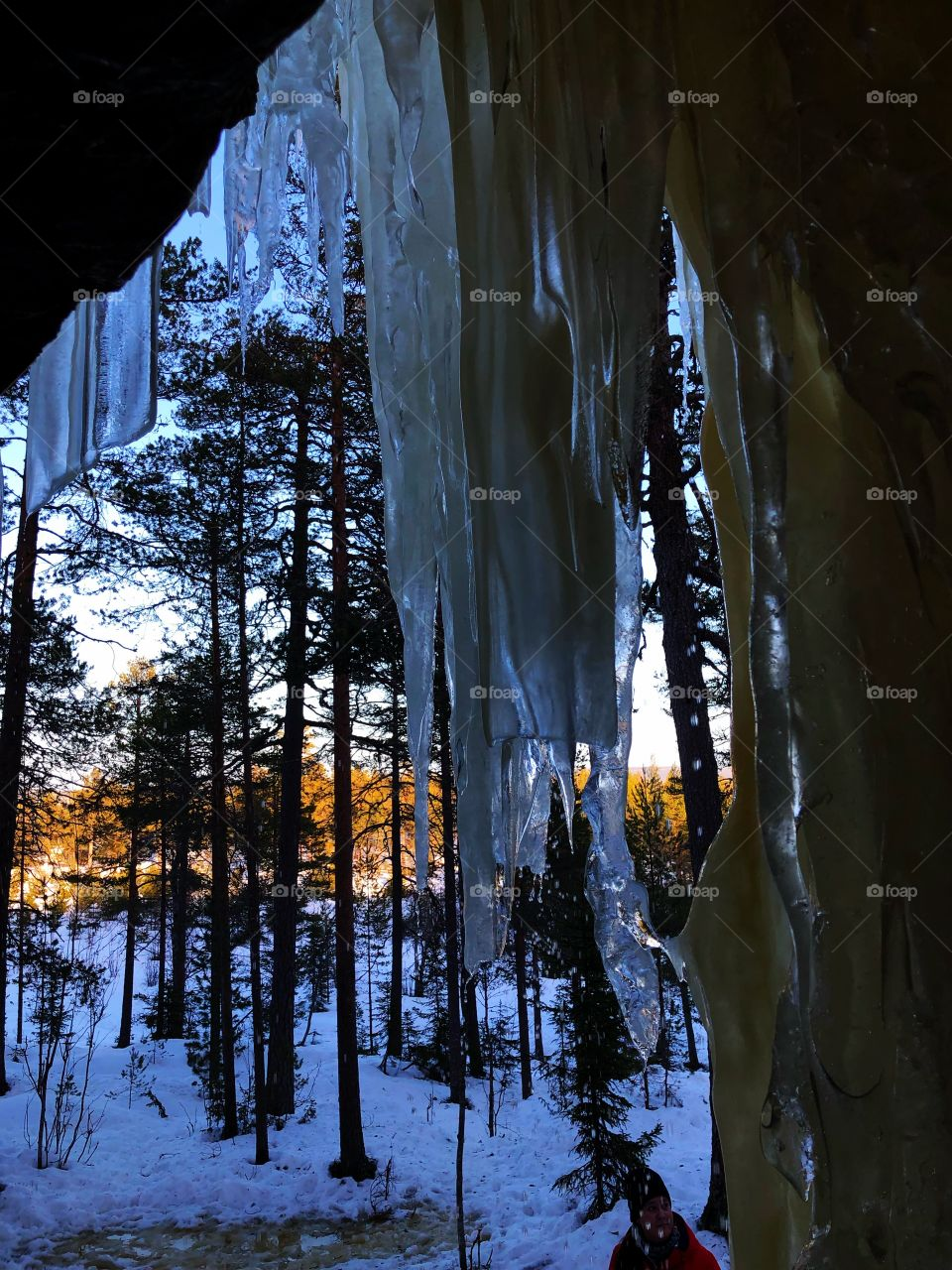 Ice in the Woods