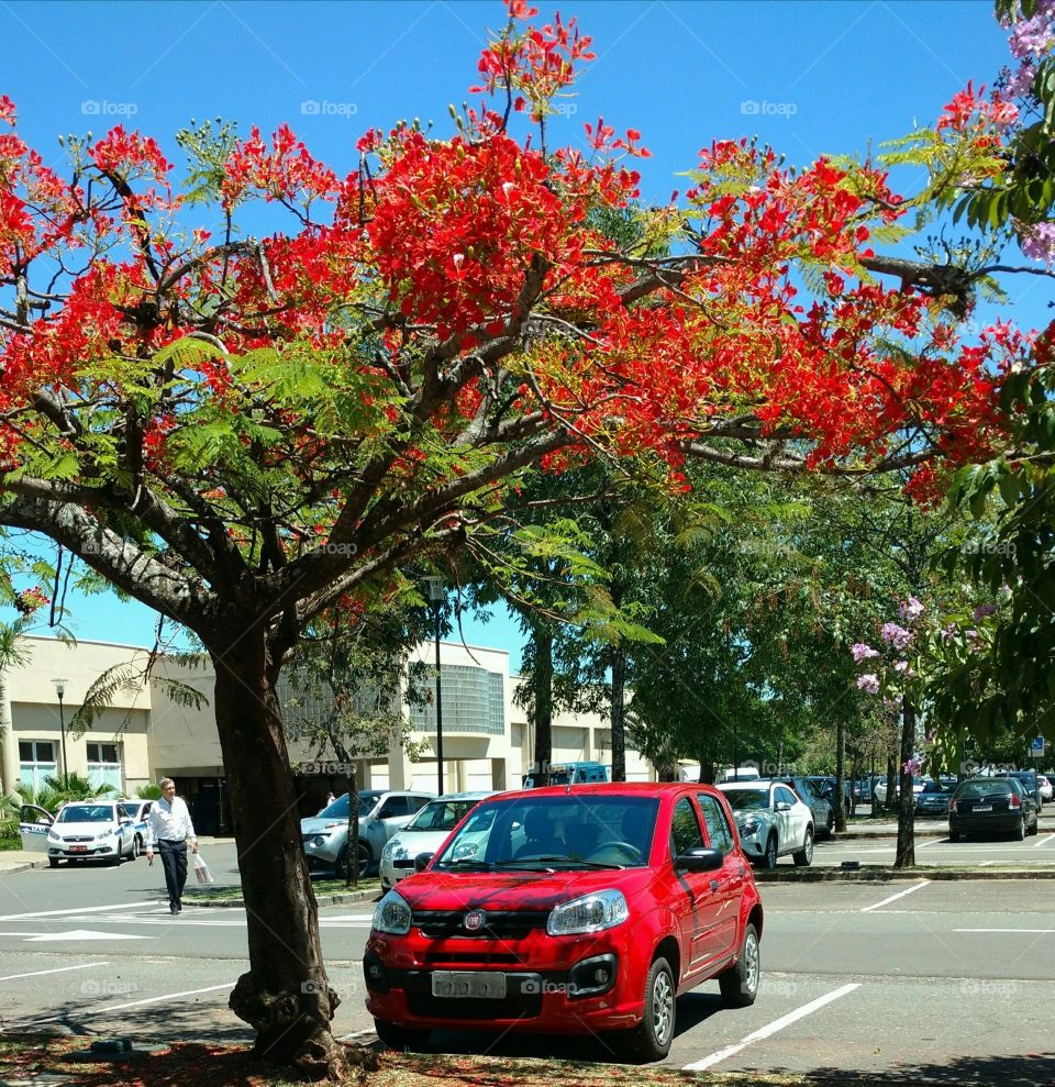 The red car and the red tree