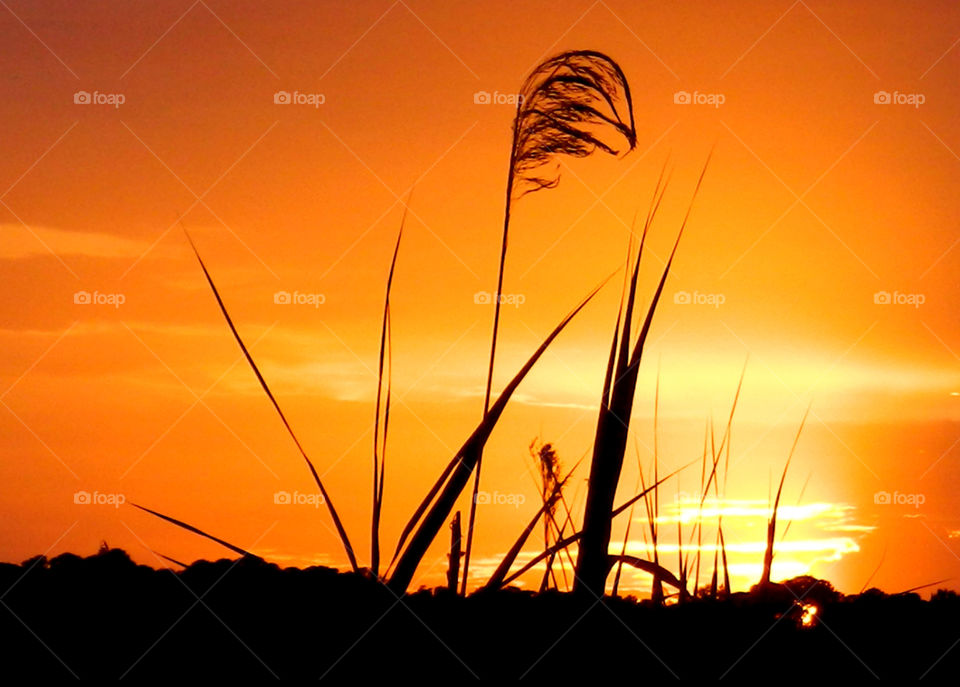 Silhouette of grass on field at sunset