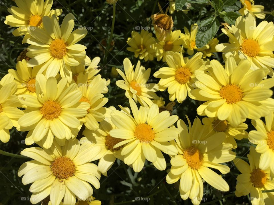 These yellow daisies seemed to be shining like stars in celebration of such a glorious summers day.