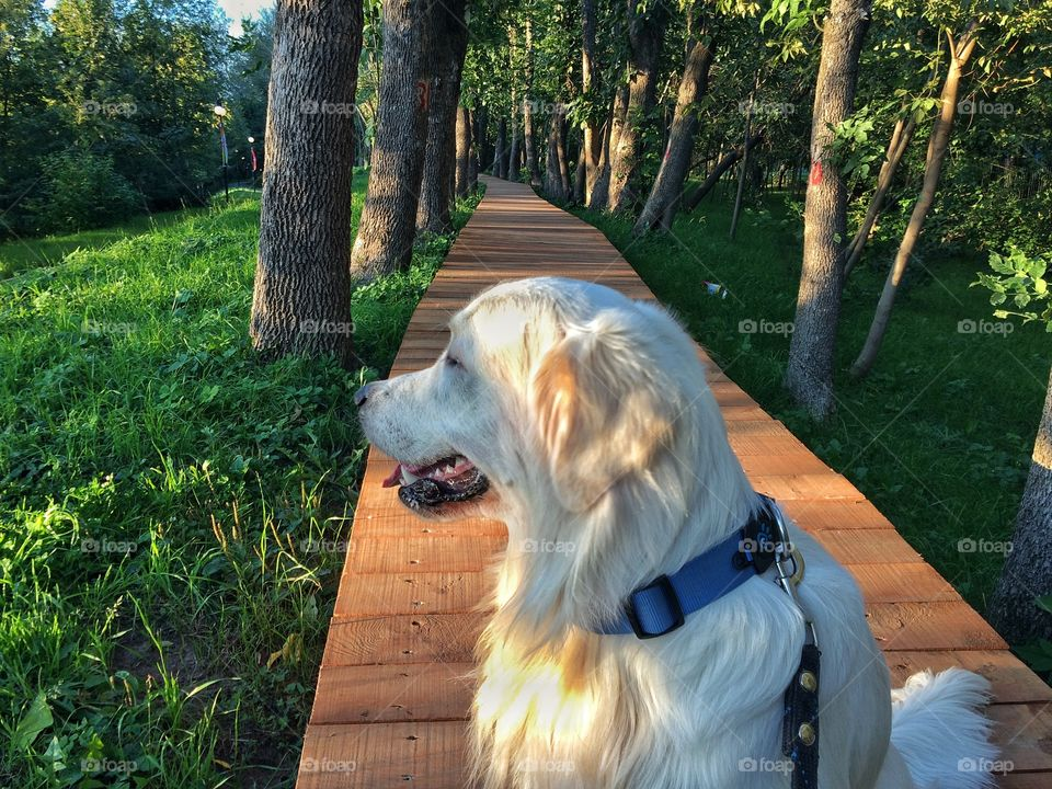 It's fun to walk on a wooden path. We love those walks with my dog.
