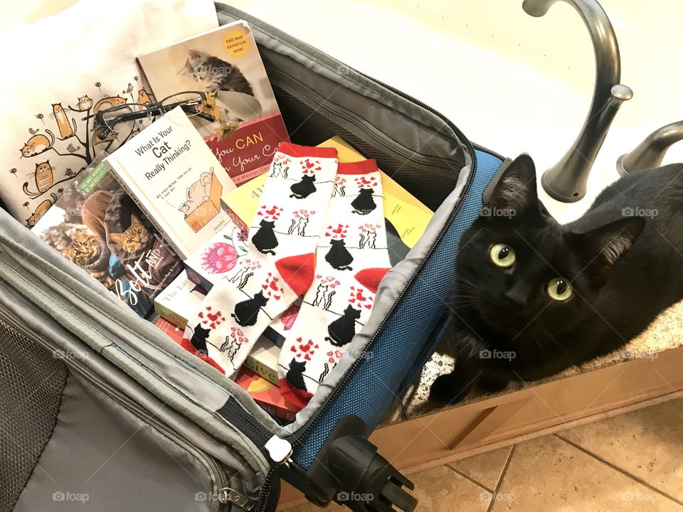 Let's get ready to travel with best feel good cat reads, reading glasses, and favorite cozy kitty sweatshirt and socks for reading!