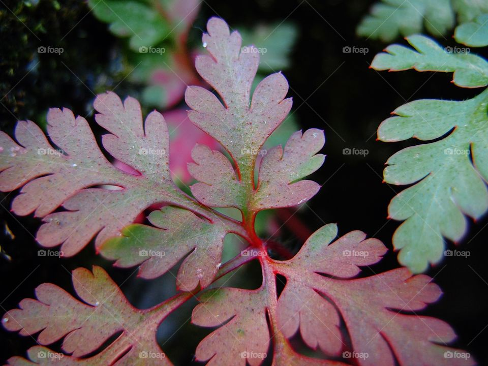 Red and green textured and shaped leaves on a plant closeup.