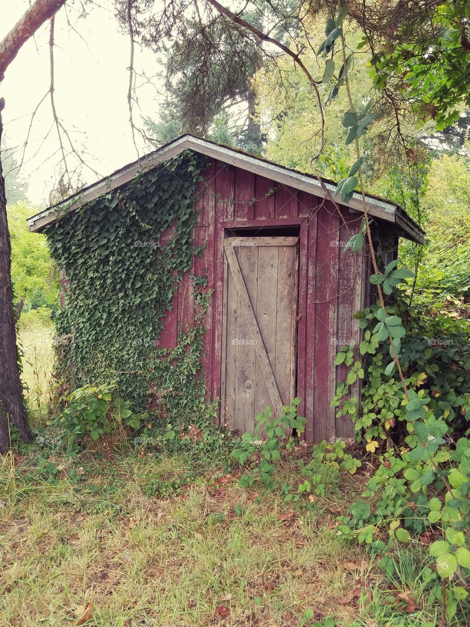 Abandoned Red Shed