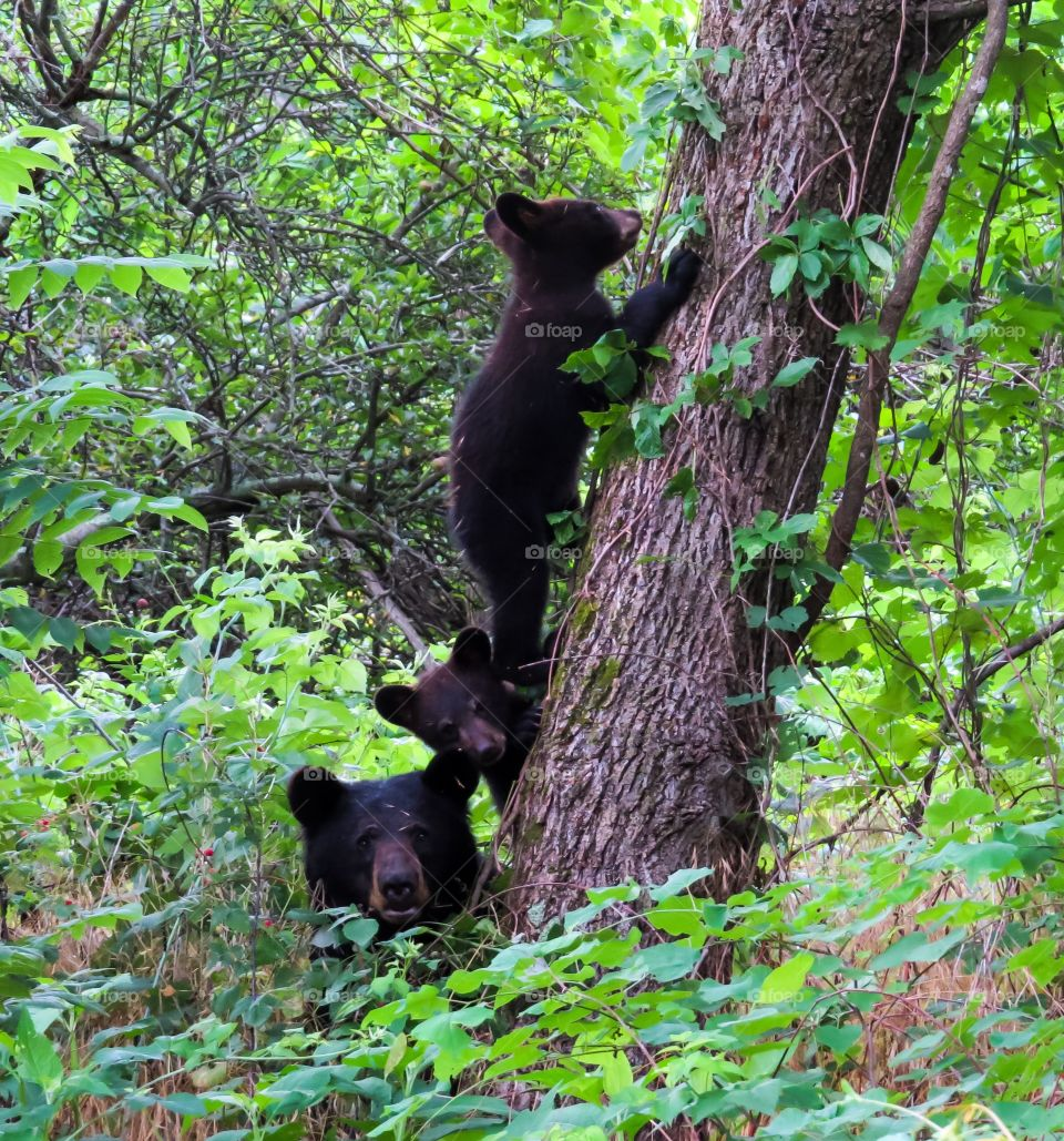 Black bear with cub in forest