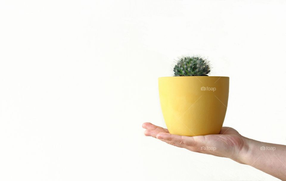 Cactus in yellow pot - rule of thirds and negative space
