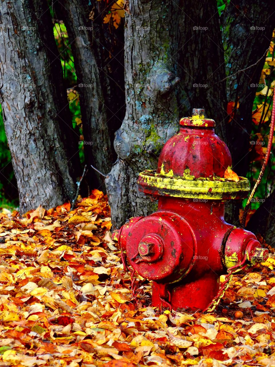Red and yellow hydrant with fall leaves