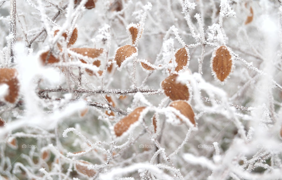 Frozen plant during winter