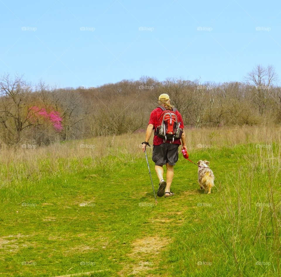 Hiking in the spring with a Miniature Australian Shepherd across a green field with a Redbud tree in the distance.