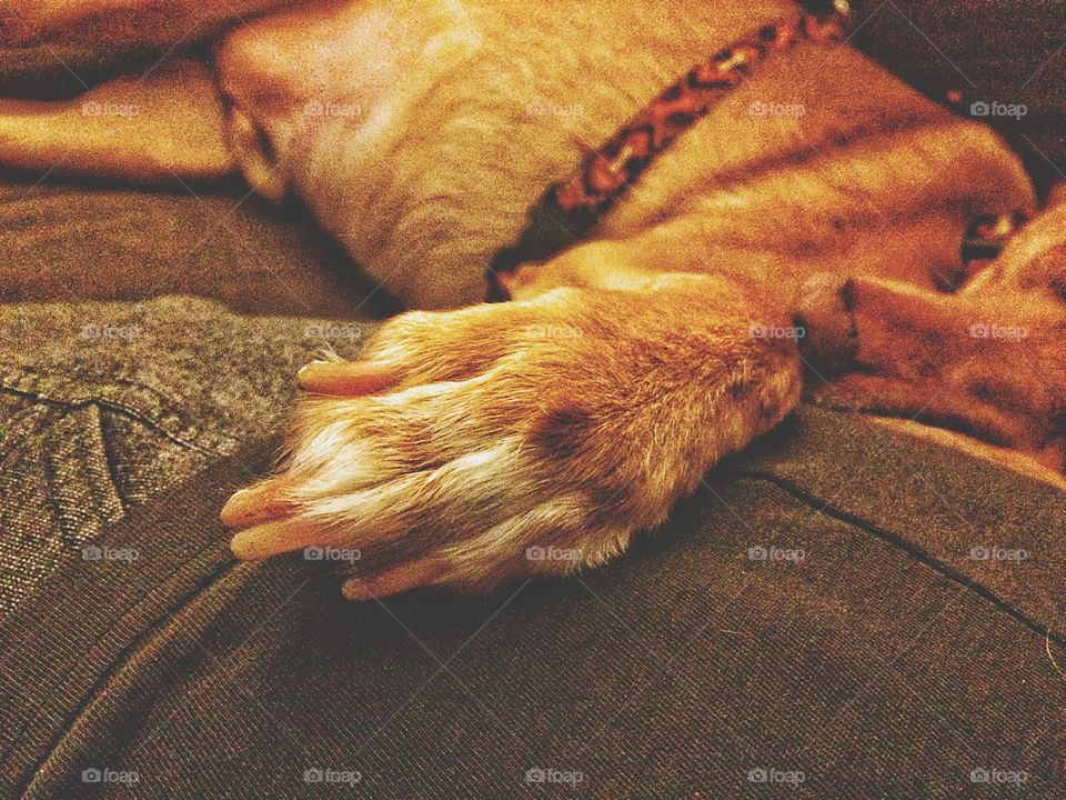 Close-up of sleeping dog