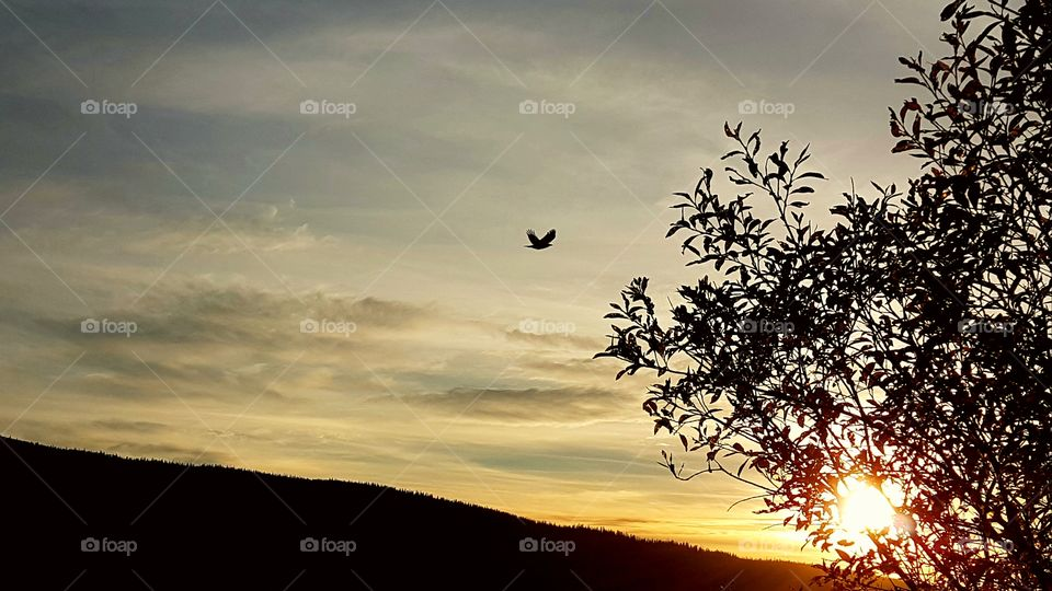 Bird flying into the sunset.