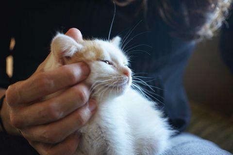 Kitten caress