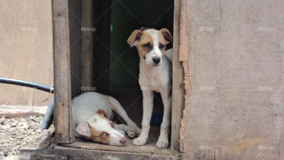 Two street dog