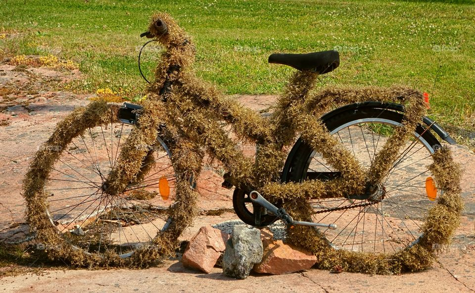 Grassy bike. Old bicycle coverd with moss in the Turki archipelago