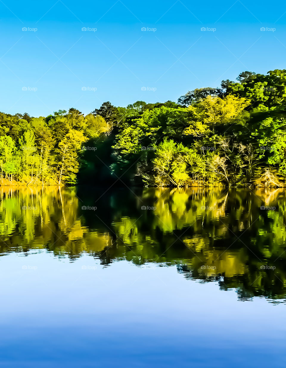 tree line water reflection