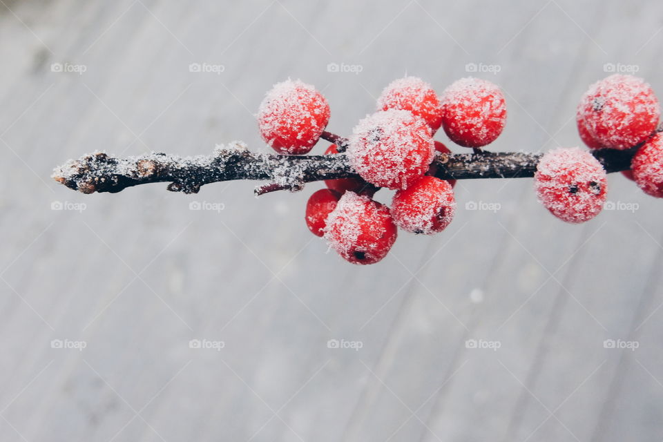 red frosty berries