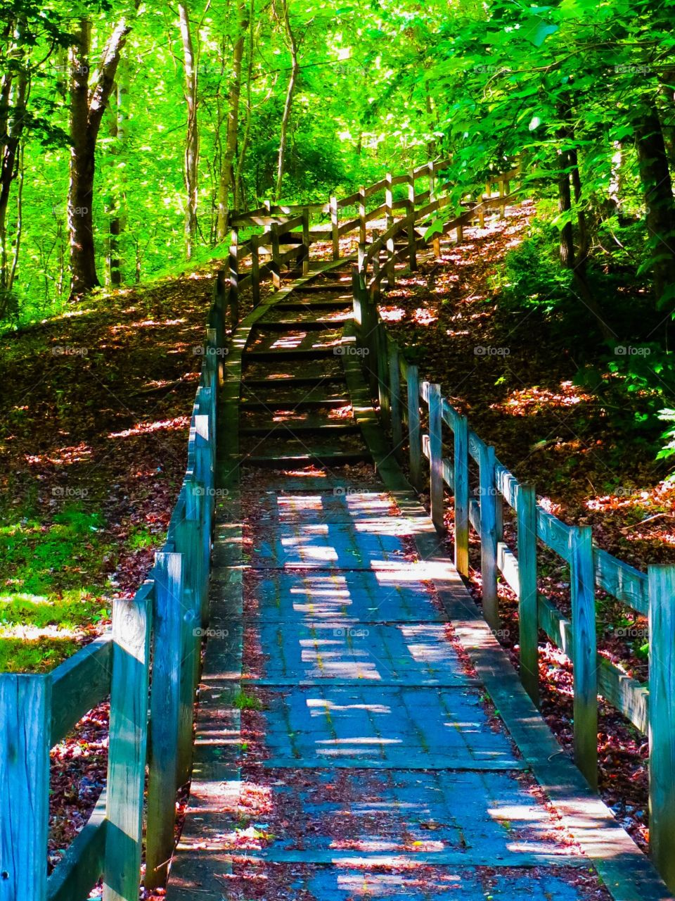 Upward Bound Trail. Hiking to the sky into a verdant forest on a upward bound trail on a summer day