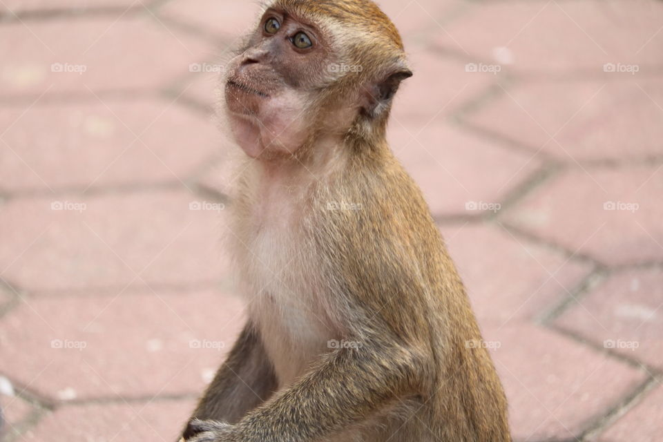 Funny face for this cute monkey