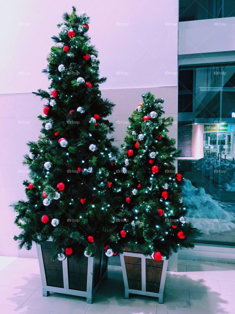 Tall & Small Christmas Trees.