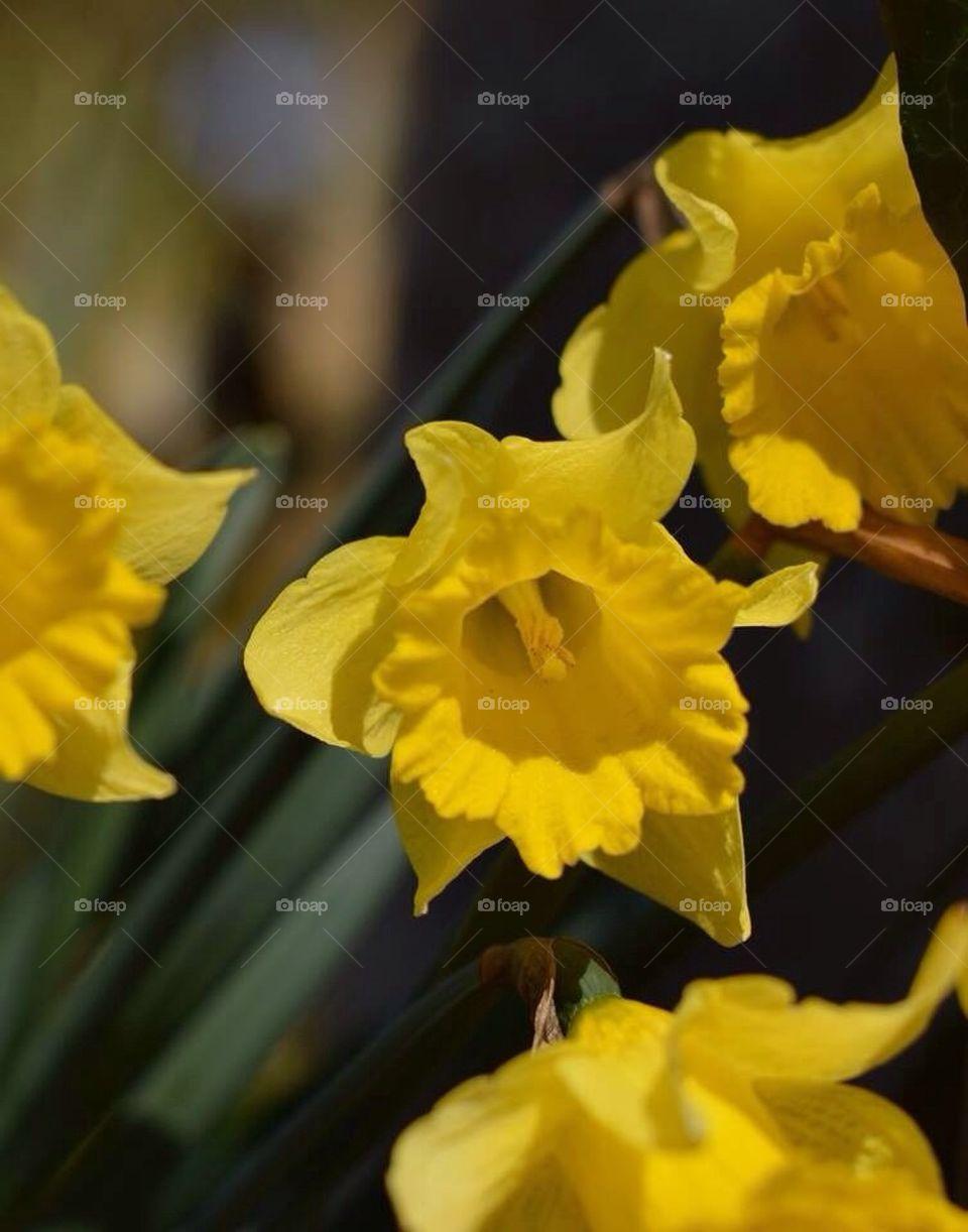 Spring's first flower