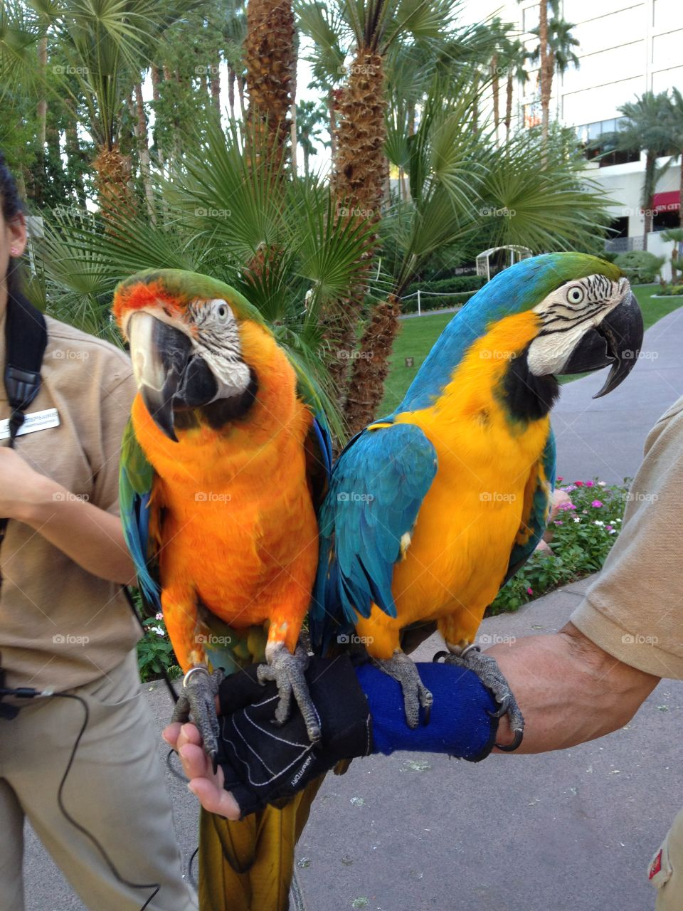 More than just yellow. Colorful parrots