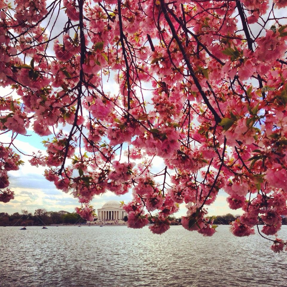 Blossoming DC