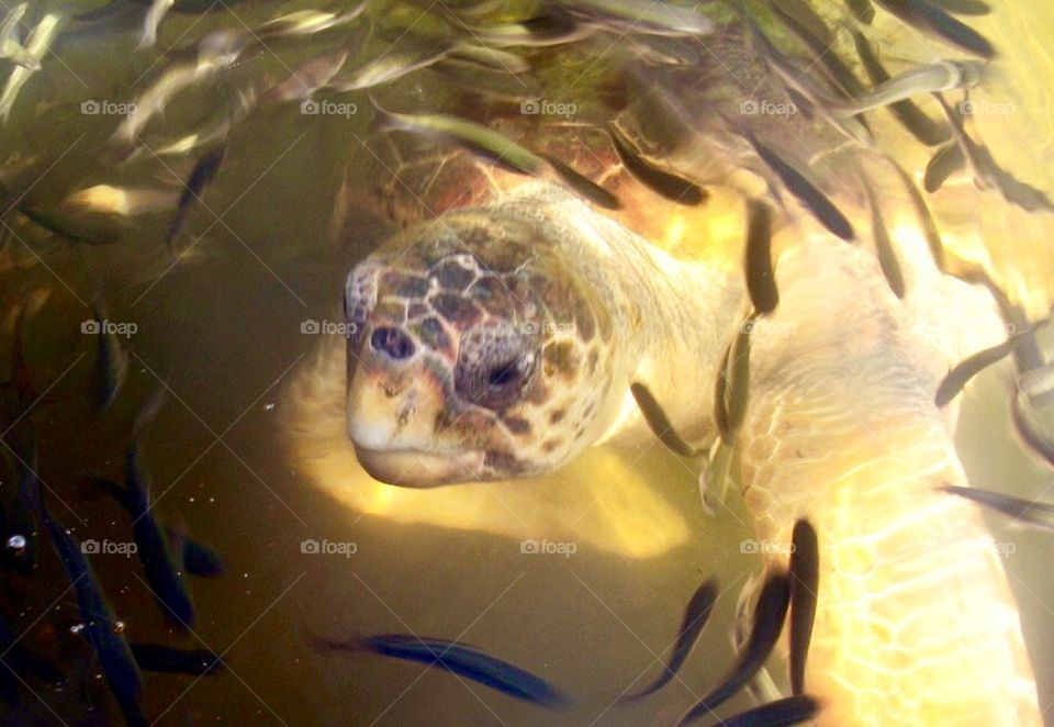 Turtle in water surrounded by little fish with light piercing through