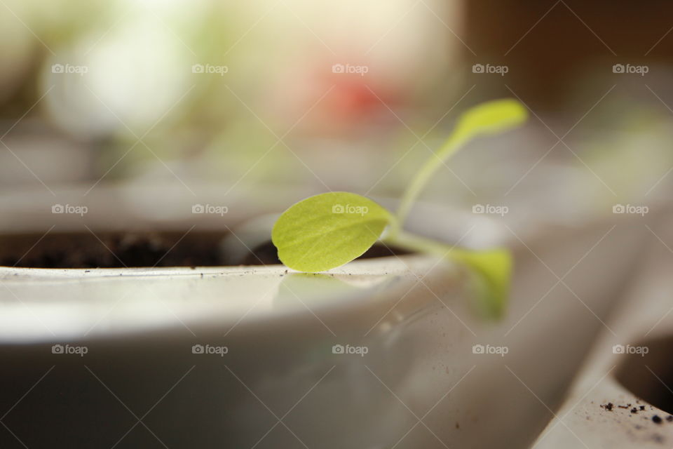 young salad leaf