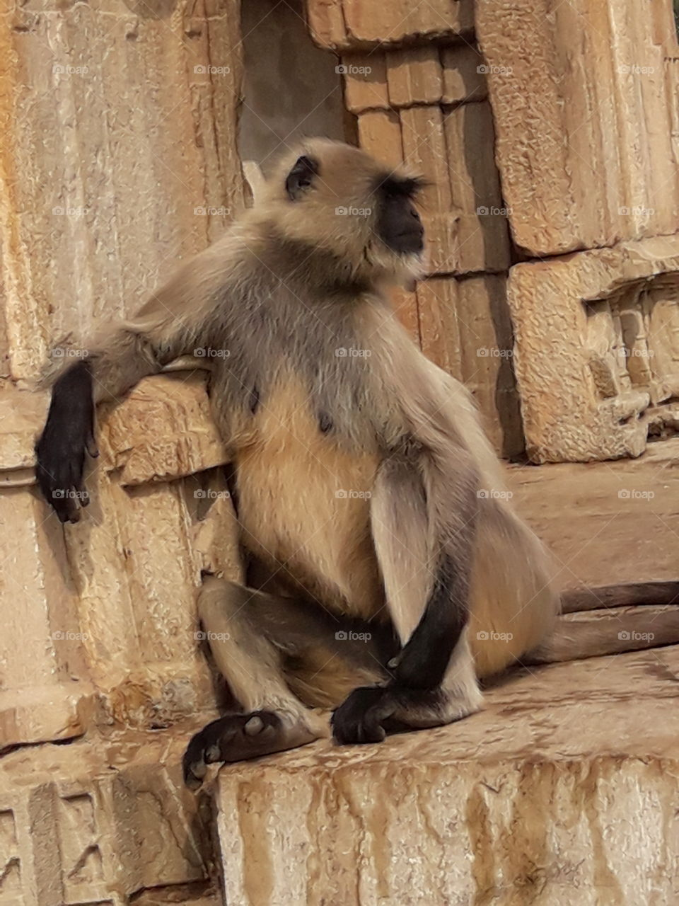 wildlife#naturelover#forfather#human#cute monkey