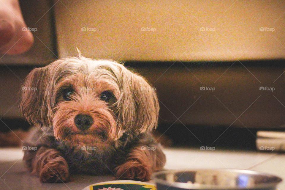 Puppy Kuro . Puppy Kuro