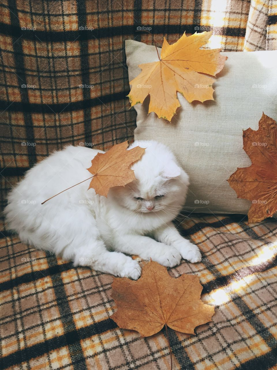 Cute white cat with autumn leafs