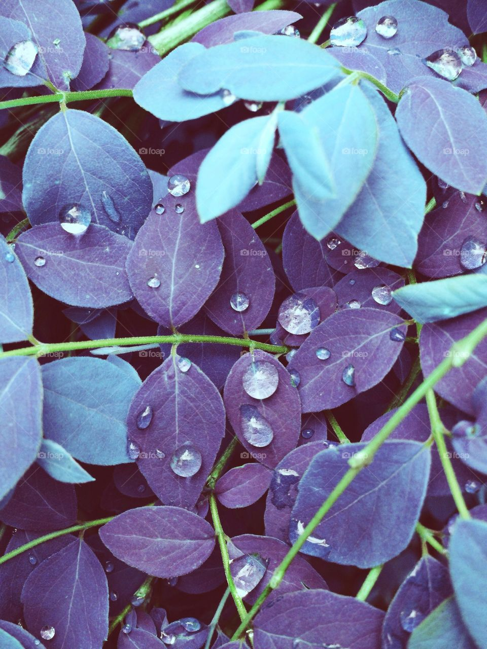 Perverted colors... . After the rain...