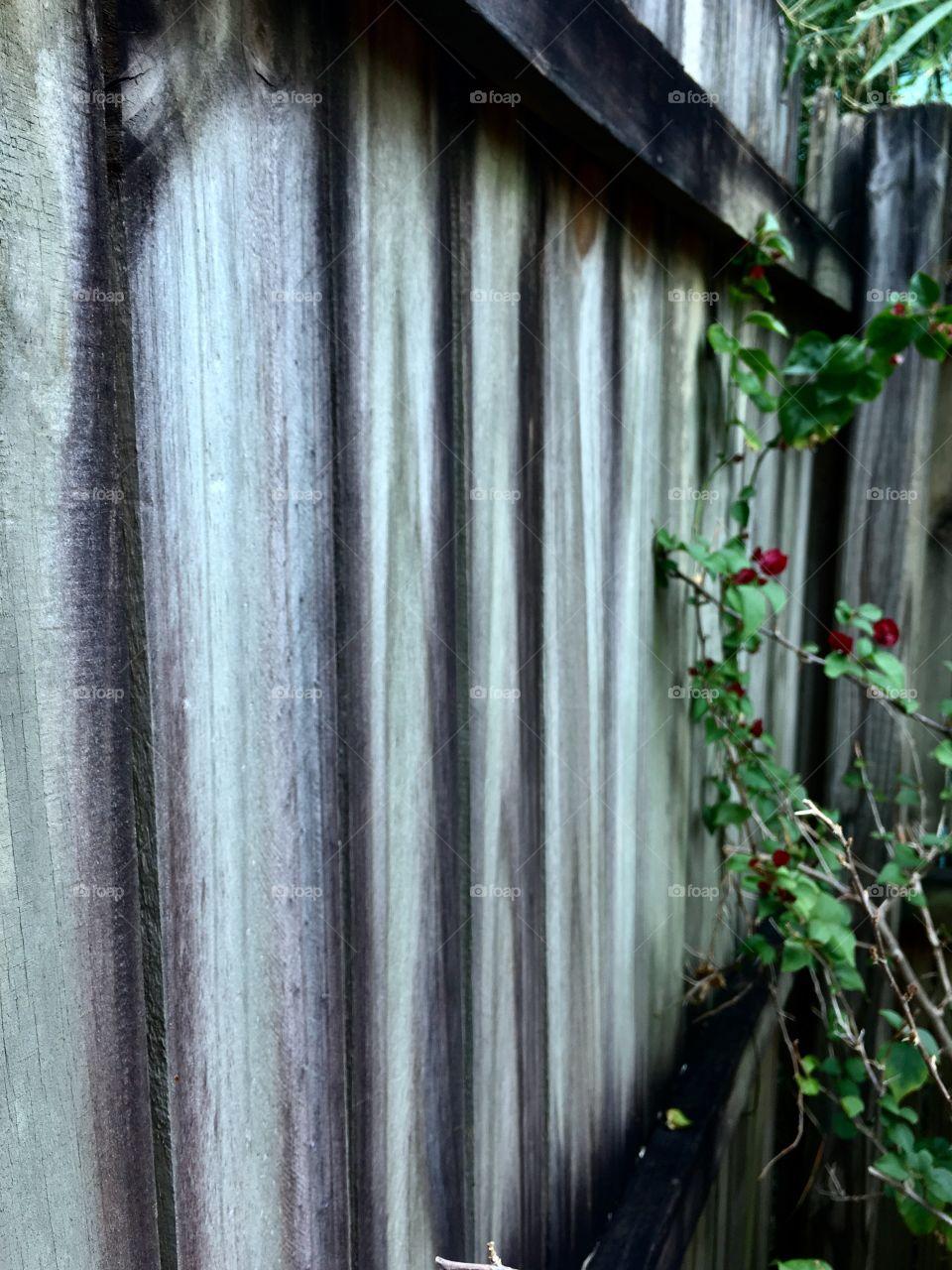 Aging grey fence.